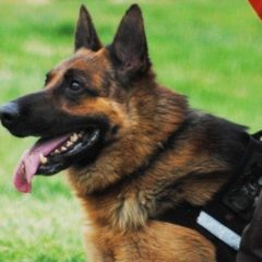 Охорона собаками територій
