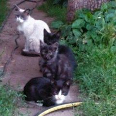 Грайливі кошенята шукають домівку