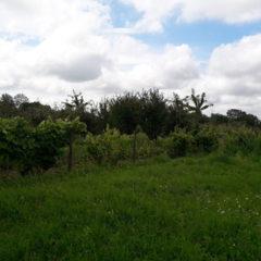 Продам ділянку з фруктовими деревами в Городоцькому р-ні