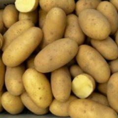 Картофель мелкий и большой, опт.