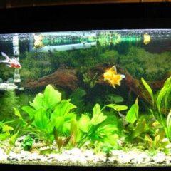 Продам акваріум 240 л, весь комплект і рибки