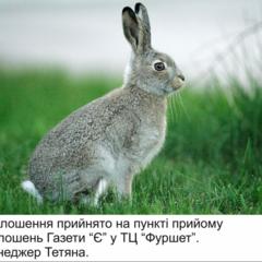 Кролі на розведення