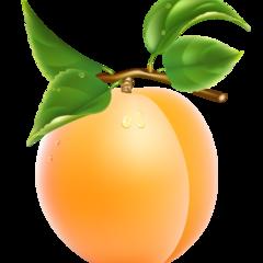 Продам саджанці абрикосів